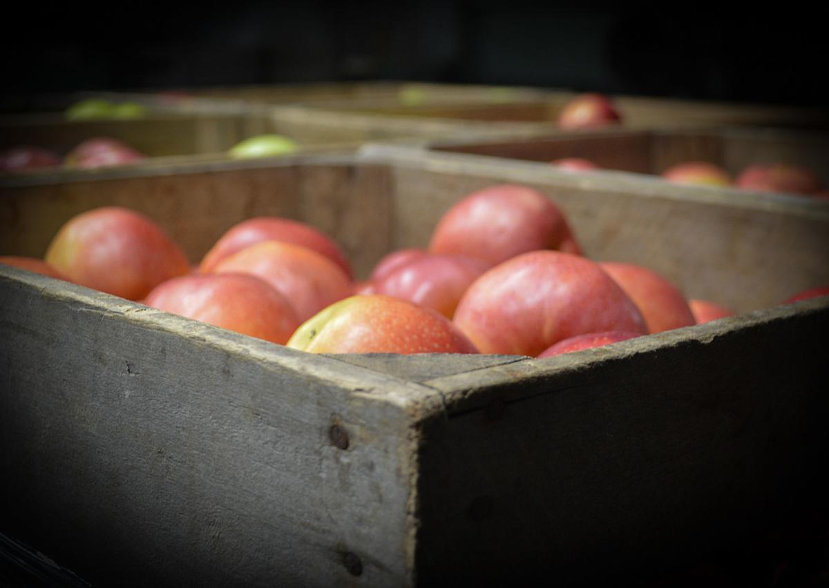 HH Catoctin Orchard 2