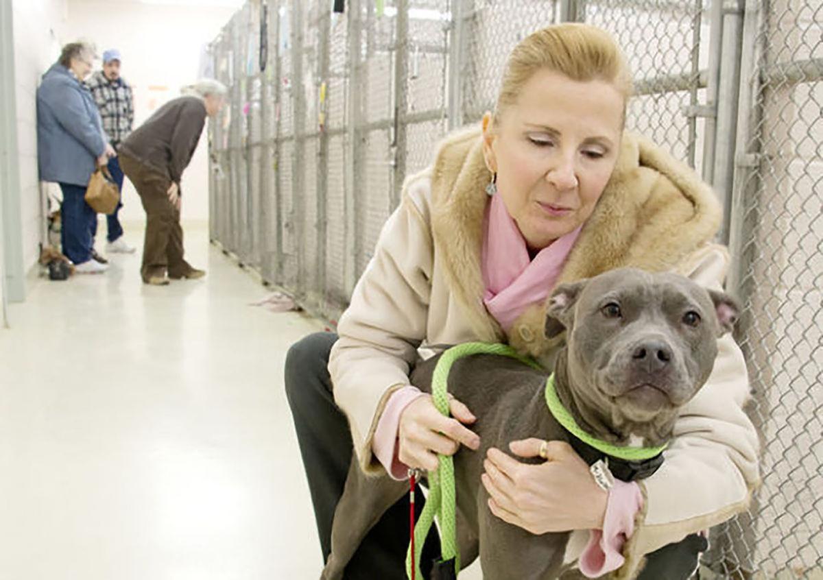 Frederick County senator pushes tax credits for dog, cat adoption