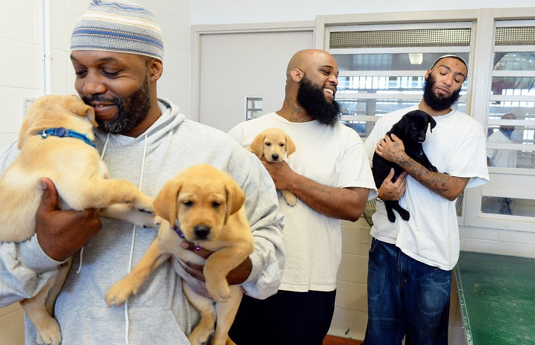 Guide Dog Training In Prisons