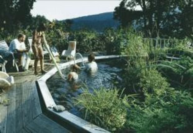 Fish tale sabillasville veterinarian goes all natural for Swimming pool koi pond conversion
