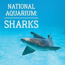 National Aquarium Sharks