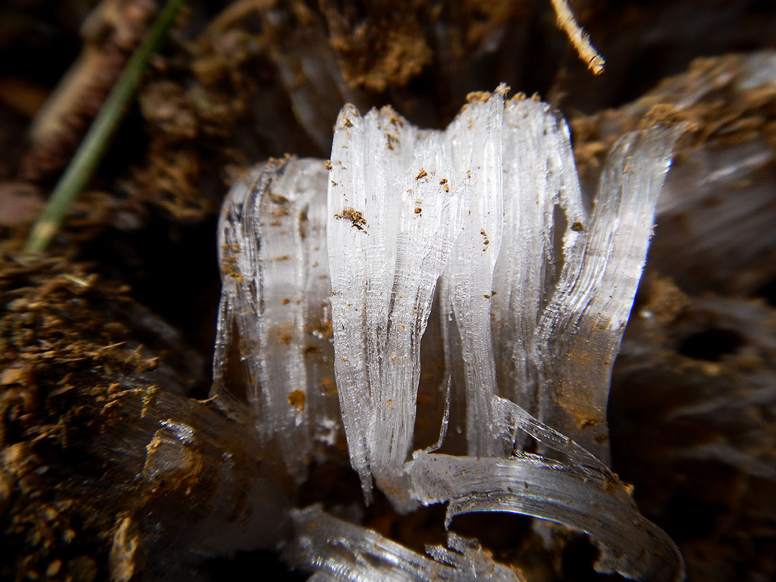 Nature Notes: Ice needles