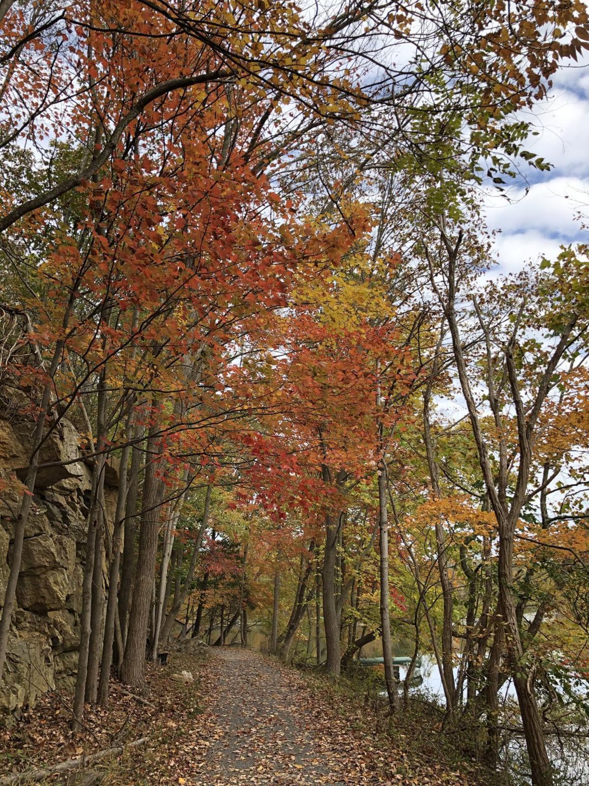 Fall 19-Linganore-2.jpg
