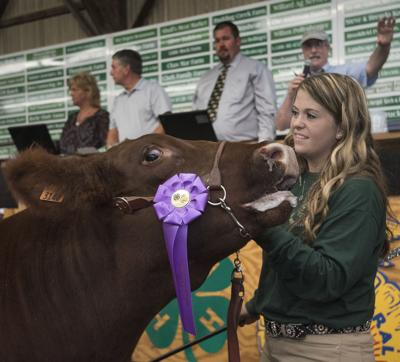 Fair Steer sold Grand Champ