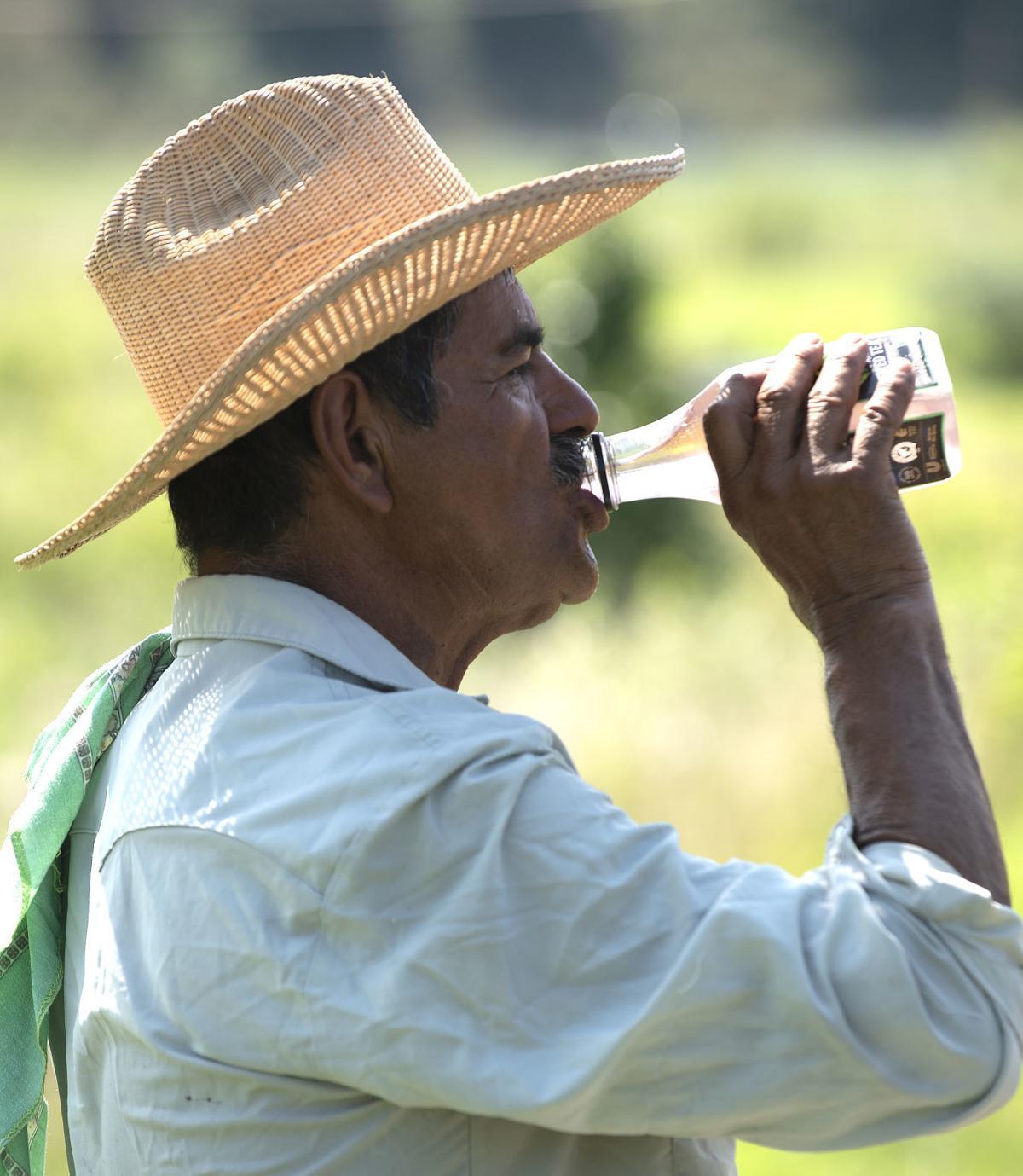 Farmers work in the heat 1