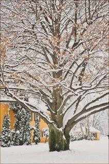 8402-op-Kline-Baker-snow-Trees copy 2 copy.jpeg
