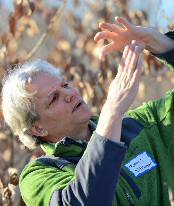 Efforts to regrow the American chestnut tree sprouting in Frederick County