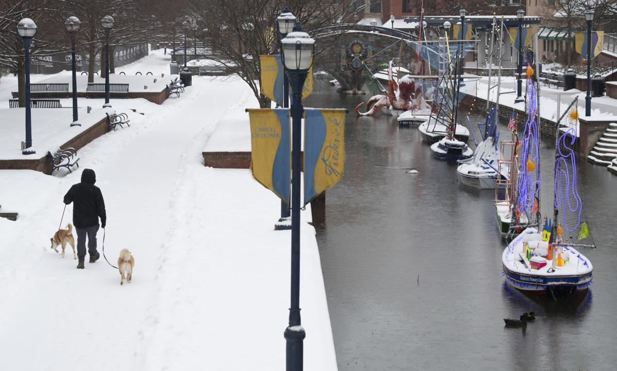 Carroll Creek Snow Dogs
