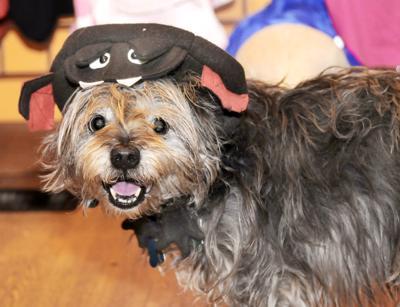 SL Halloween Dogs 1.jpg (copy)