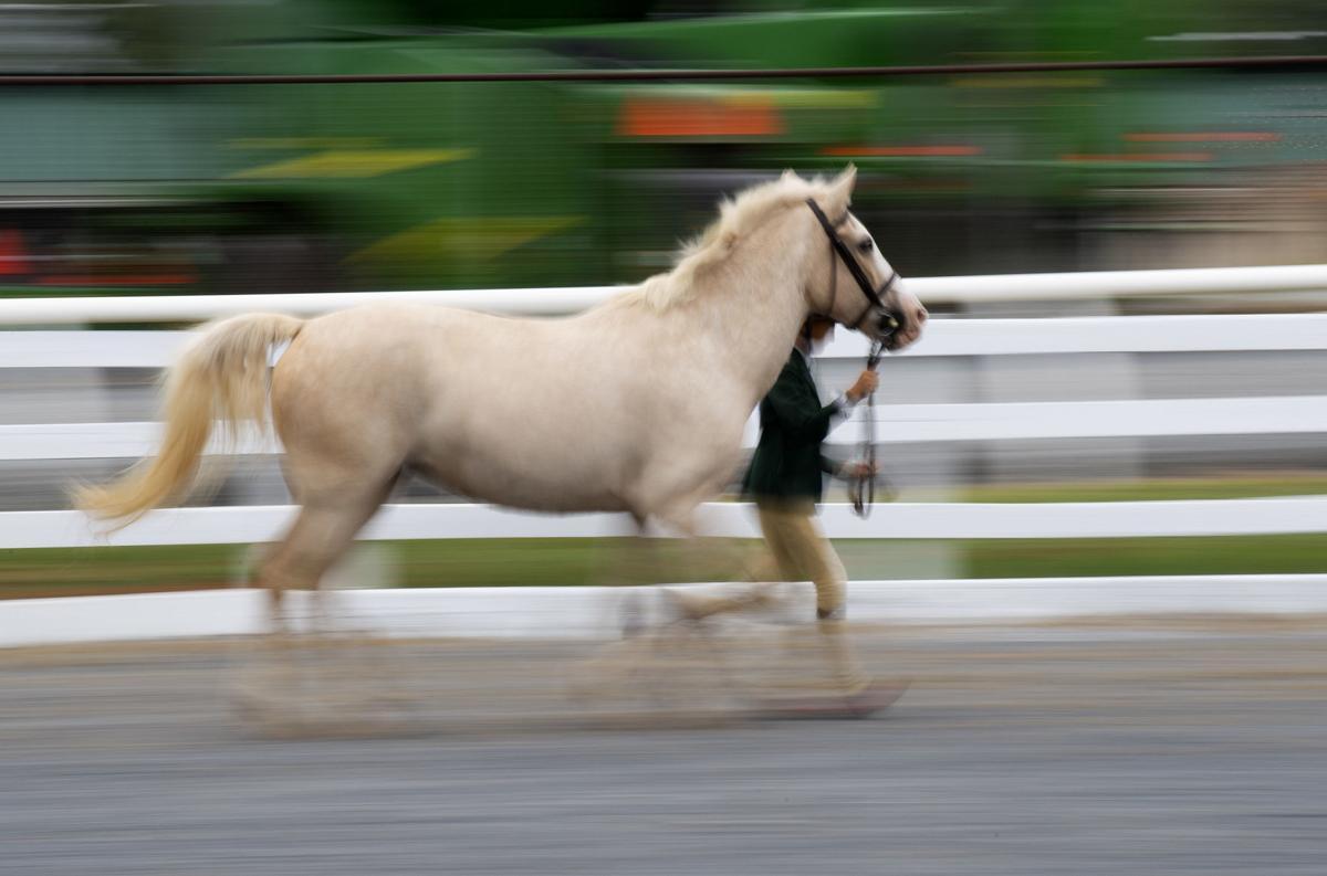 Fair- Horse Competition