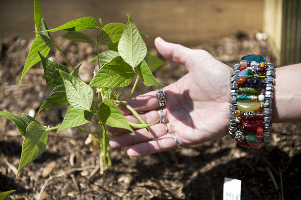 Garden rooted in faith to feed community