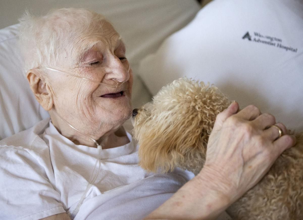 Hospice Therapy Dog