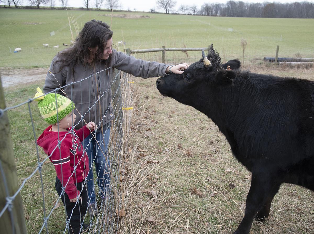 Mt Airy farm story 3