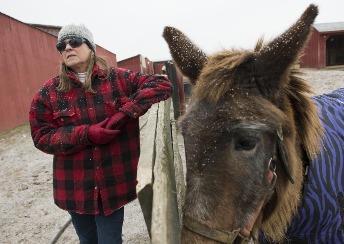 Maryland Horse Rescue