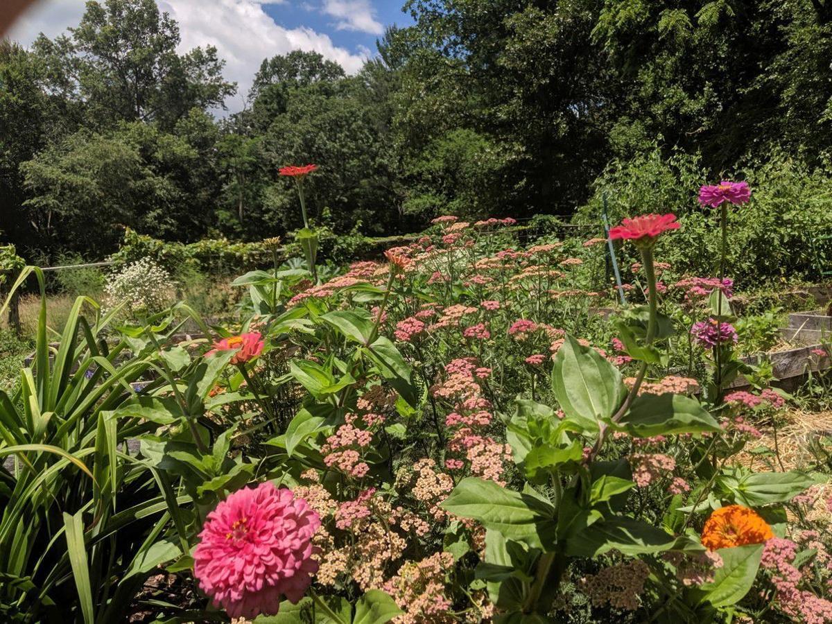 Photo1 zinnias.jpg