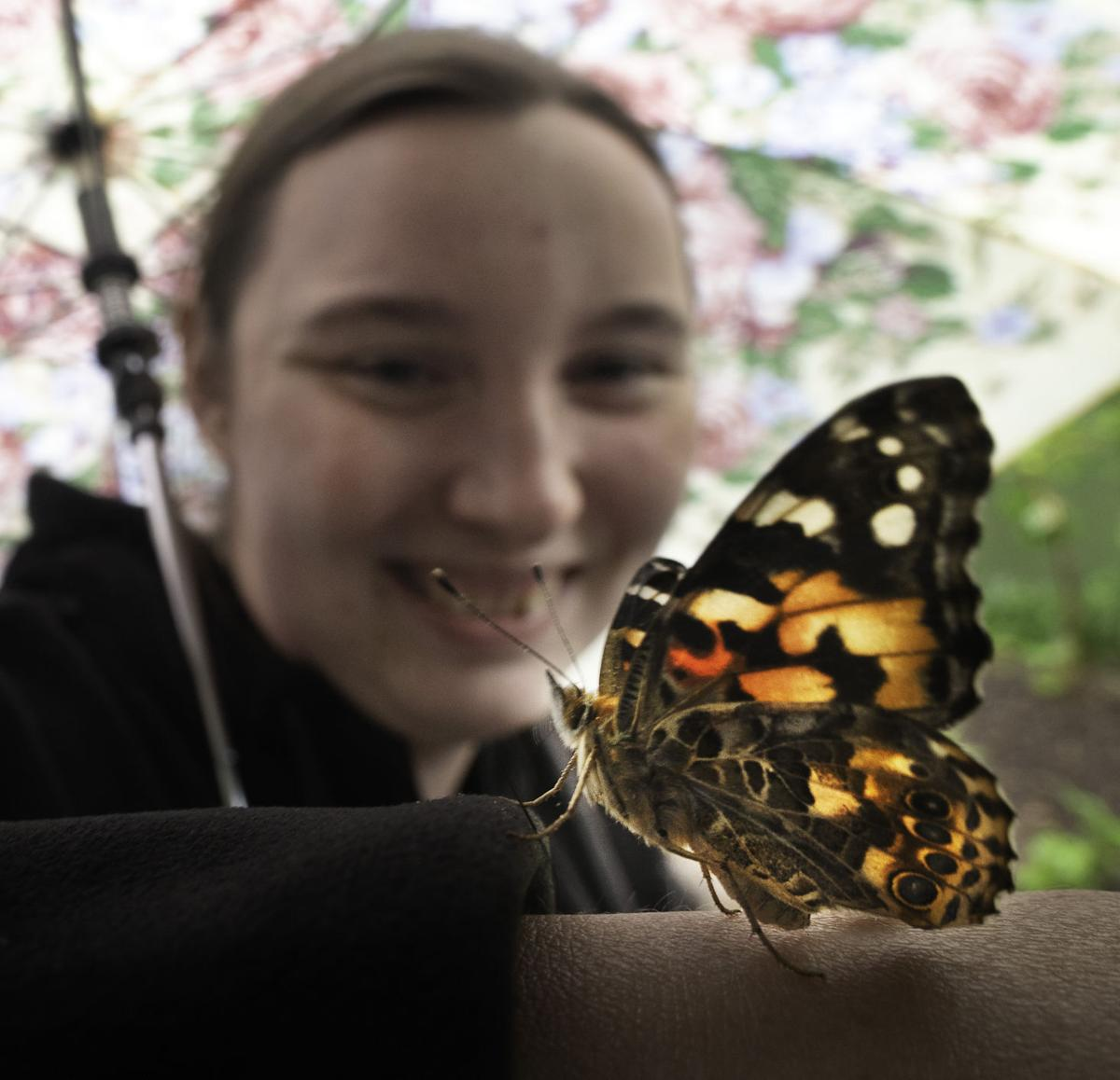 Catoctin Wildlife Preserve Butterfly