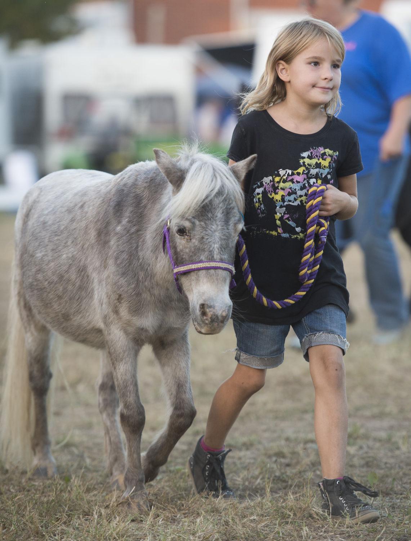 Horse Parade
