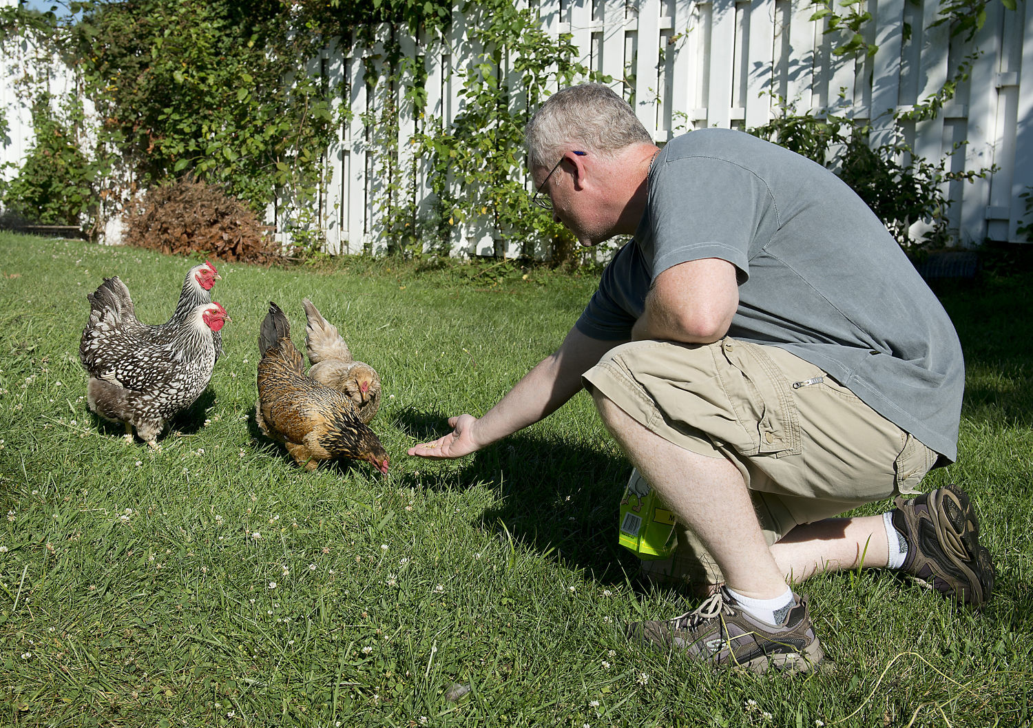 New Plan Could Allow Backyard Chickens In Frederick