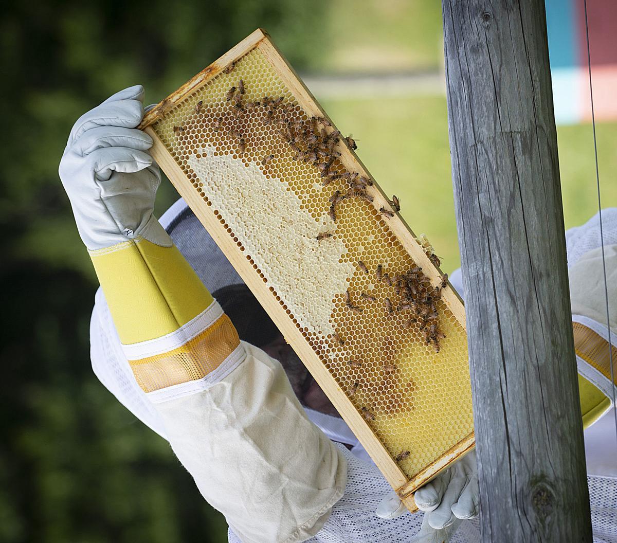 Dry Run Honey