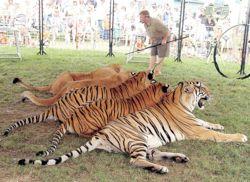 Cat show creates a roar