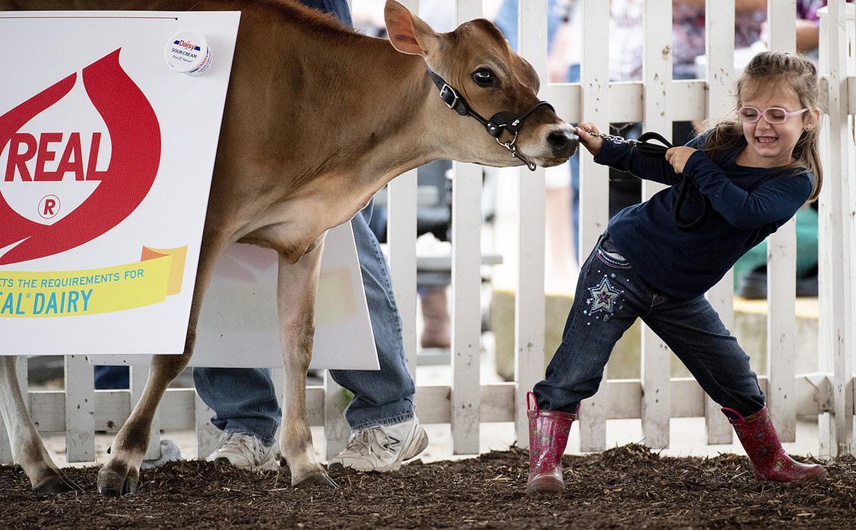 Fair Pretty Cow