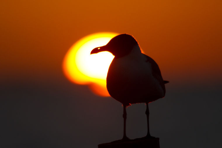 Shooting at sunset