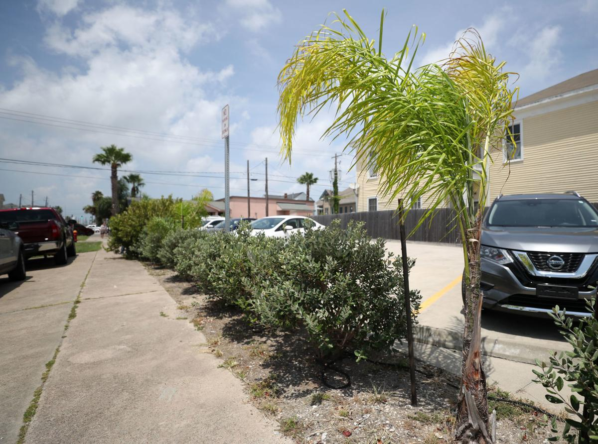 Palm tree protection