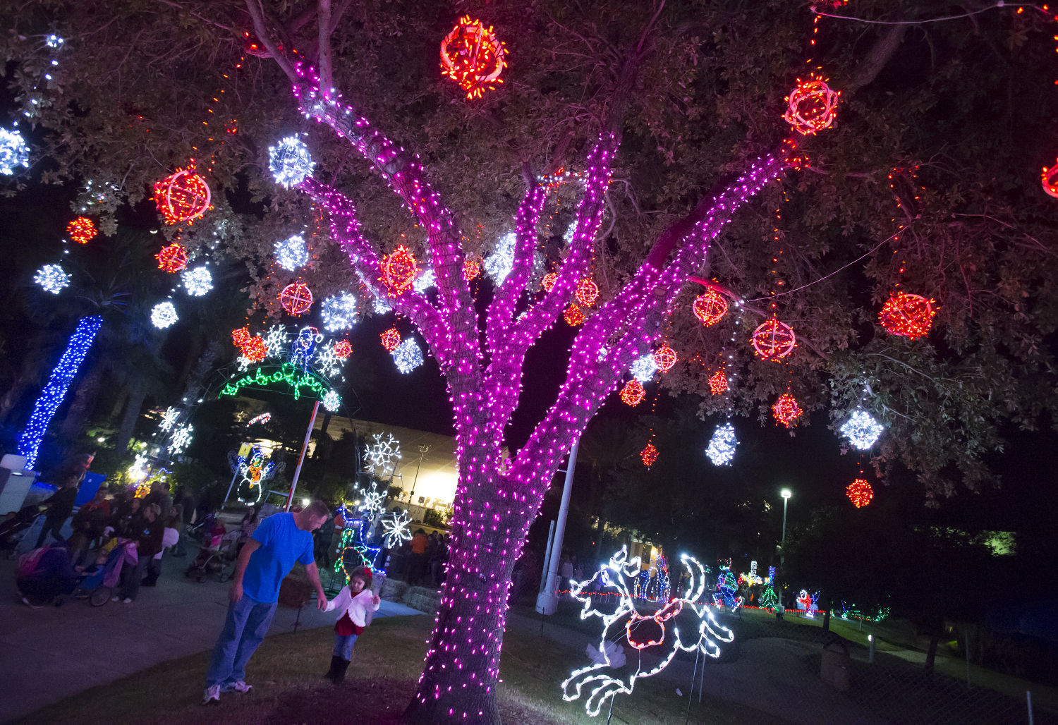 Moody Gardens kicks off annual Festival of Lights News The Daily