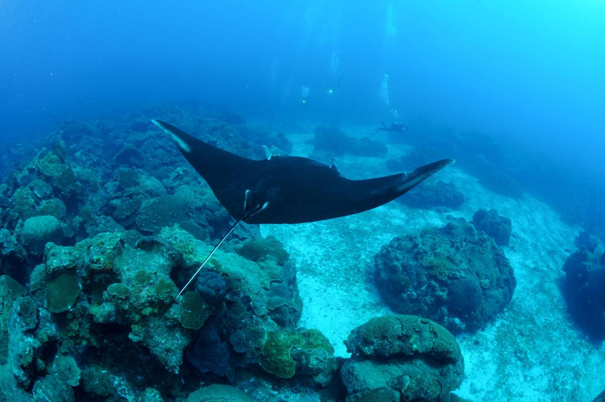 NOAA takes up sanctuary expansion