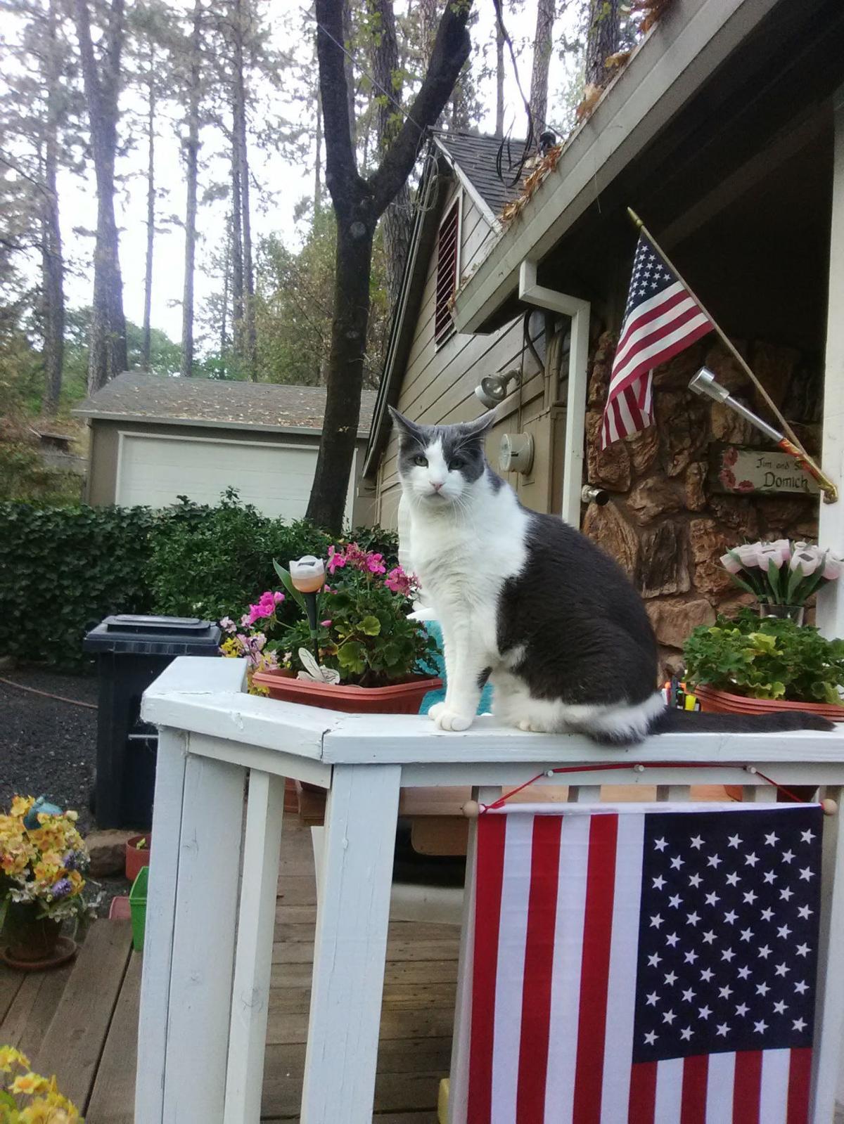 Twinky Winky the fire cat of Paradise.jpg