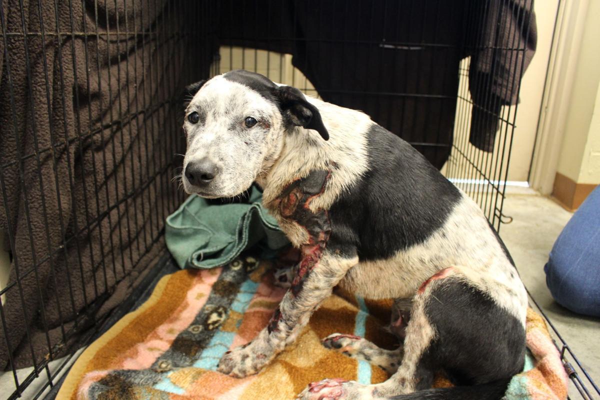 Facebook Rescued Dog Resource Center