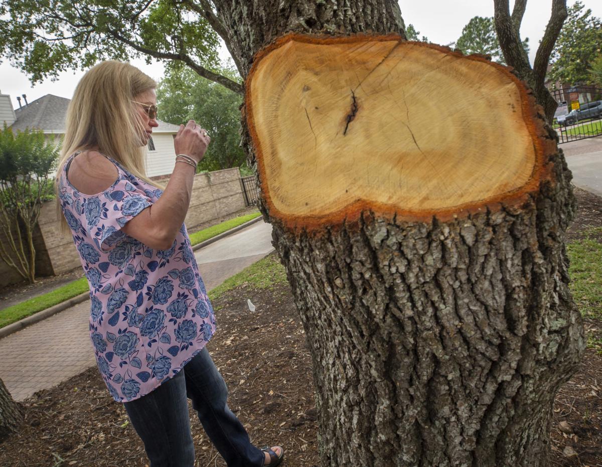 Lakeside Preserve Trees