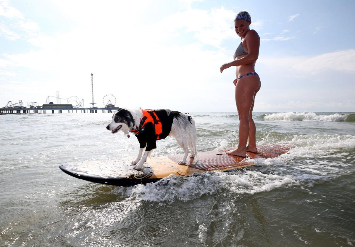Dogs, owners compete in annual surfing competition