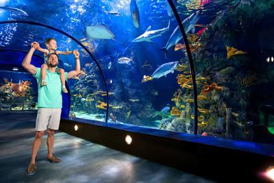 Moody Garden Aquarium