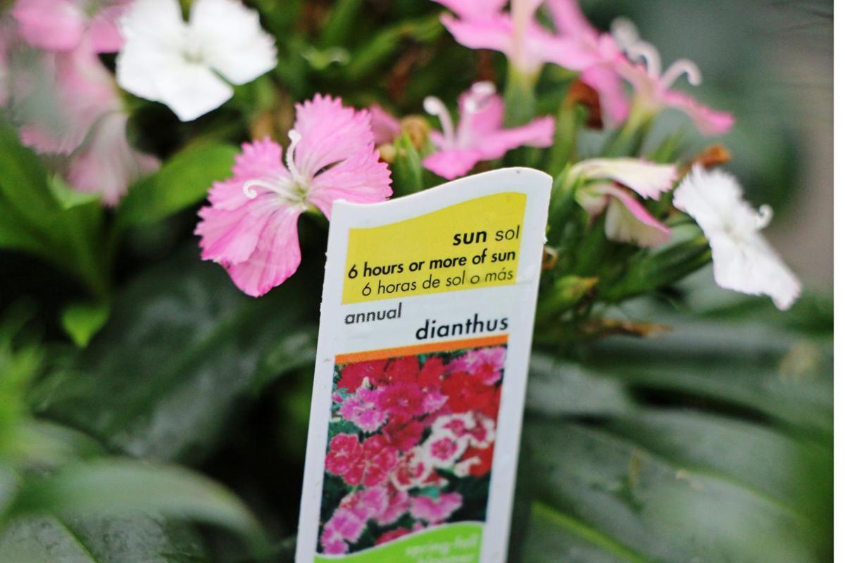 Potted plant plastic label icon