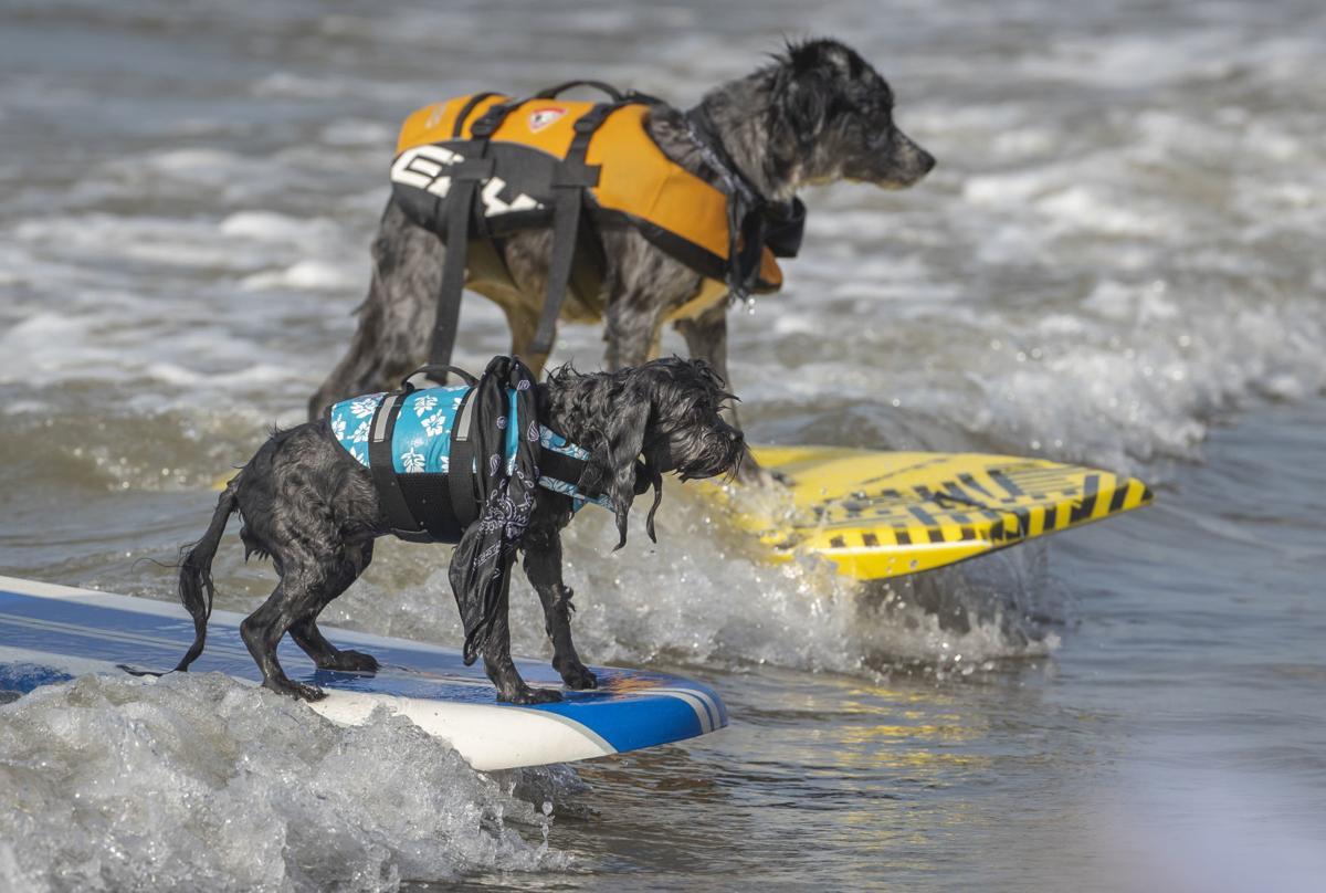 Ohana Surf & Skate 2018 Surf Dog Competition