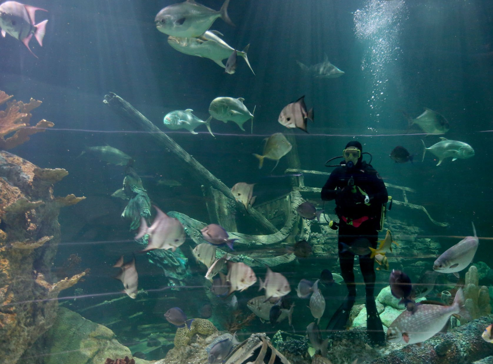 Moody Gardens shows off new shipwreck habitat Leisure The