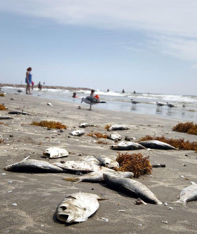 Hundreds of fish wash up on isle beaches