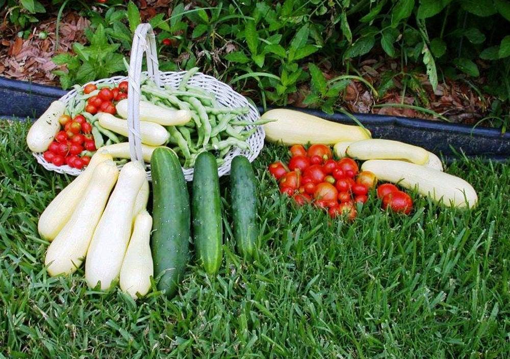 Late-summer and fall gardening seasons