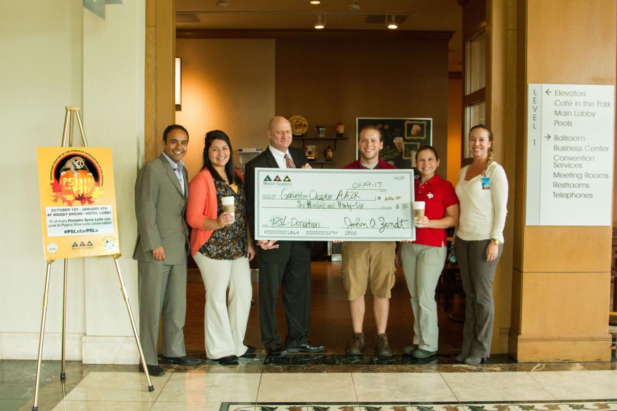 Pygmy Slow Loris Conservation donations surpasses previous year\'s ...
