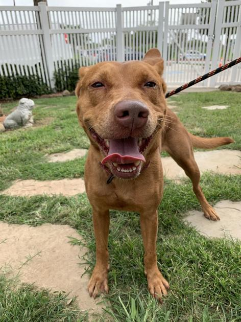 Galveston Island Humane Society pets of the week
