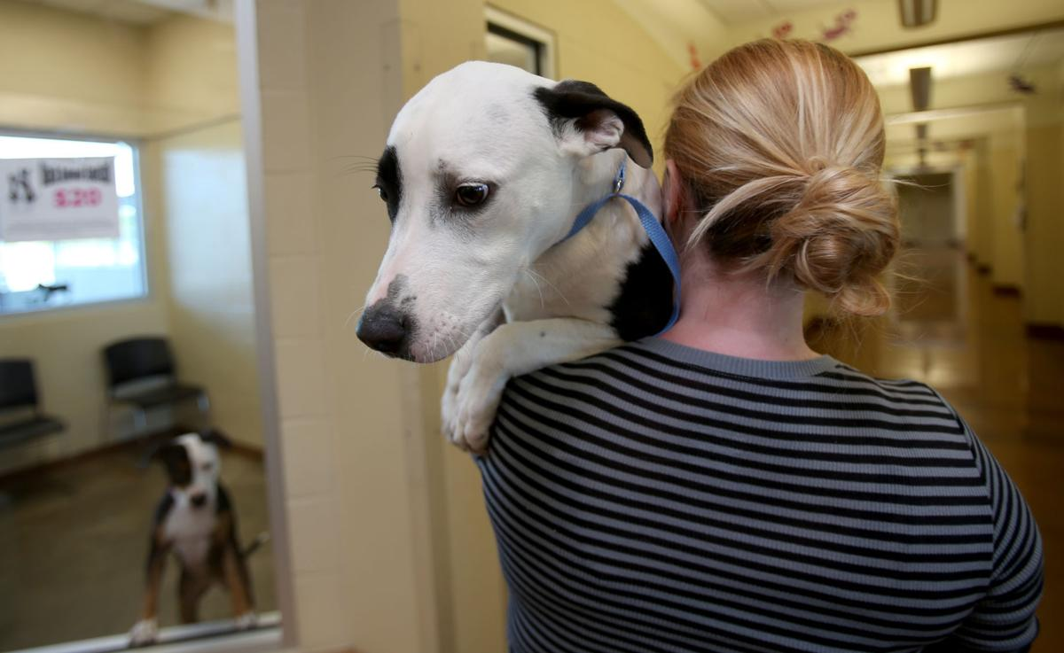Death rate down at Animal Resource Center
