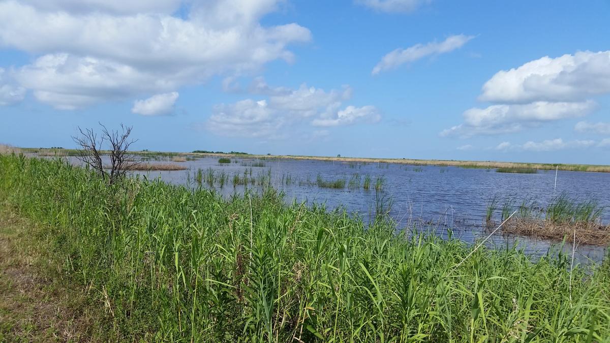 Gulf Coastal Plains Mitigation Bank