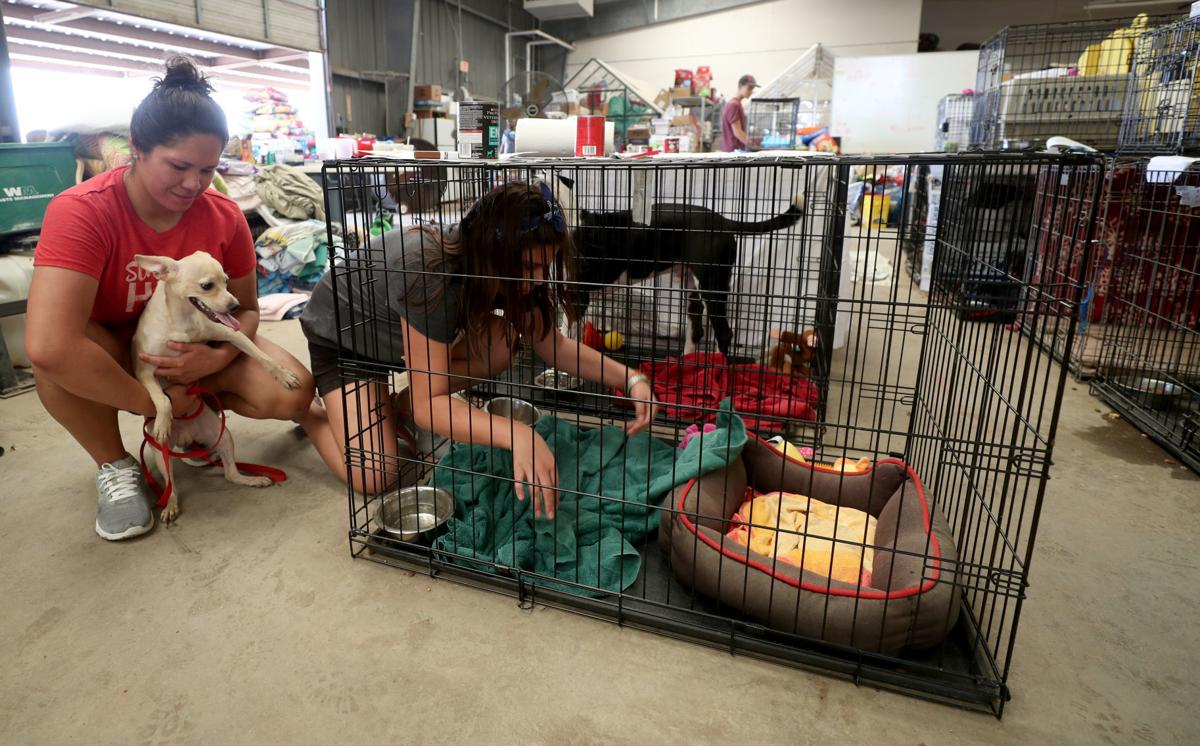 Shelter staff, volunteers care for animals