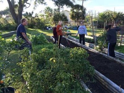 Seeding Galveston
