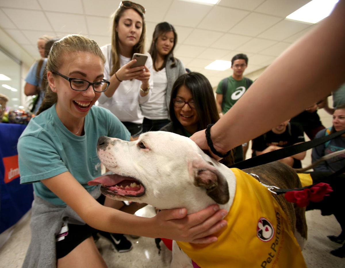 Therapy dogs help relieve stress during finals