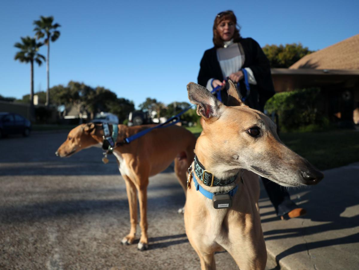Florida bans racing greyhounds
