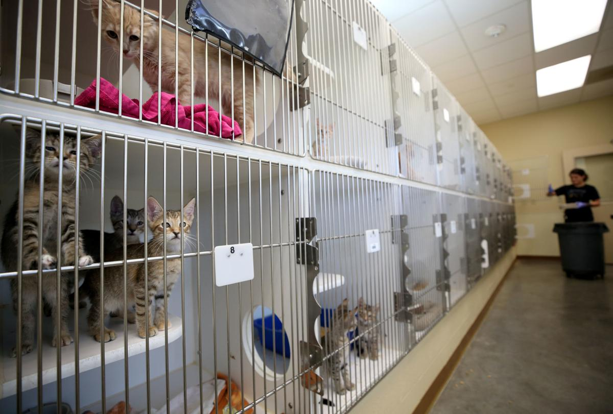 Animal Resource Center at capacity