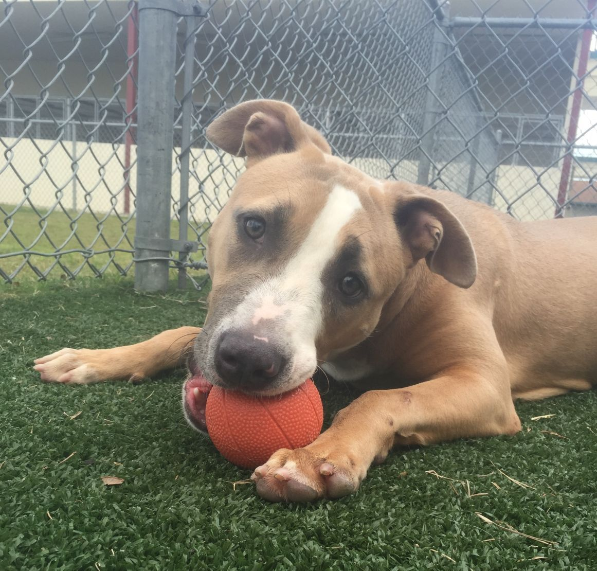 Dog Friendly Jobs Orange County