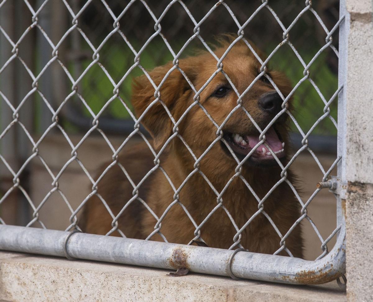 Bay Area Pet Adoptions
